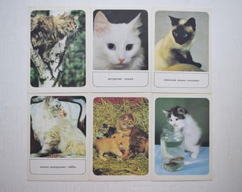Set of vintage Postcard Vintage cards Decorative breeds of cats 17 photos of cats