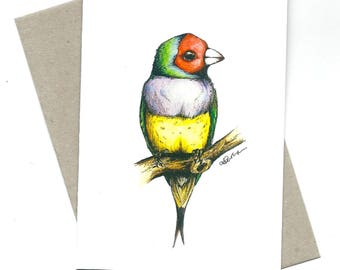 Gouldian Finch illustration / greeting card / A6 size