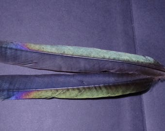 Set of 2 natural feathers of tails