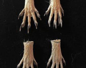 pair of ground squirrel feet - prairie dog feet - taxidermy - claw -raw material-approx. 1.5 inches