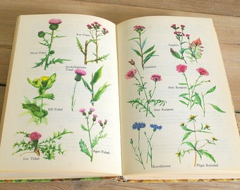 Vintage flora book guide.Vintage wild flower field guide.Vintage flora illustrations.Book pages flowers.Collage pages.flower book.journaling