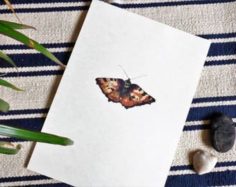 Butterfly illustrated art print