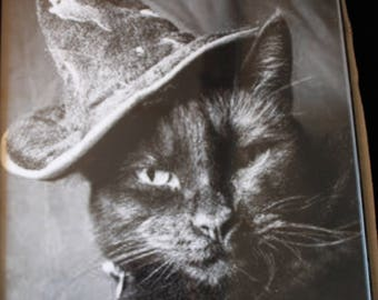 Witch Cat Photo