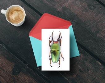 stag beetle- insect greeting card- bug notecard -photography- entomology-science gift-insect art-minimalist art-insect lover gift-beetle art