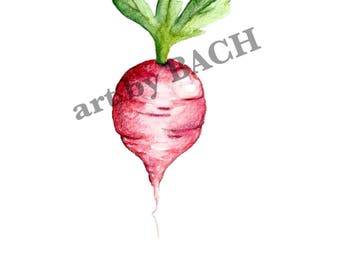 5x7 Radish Illustration Print