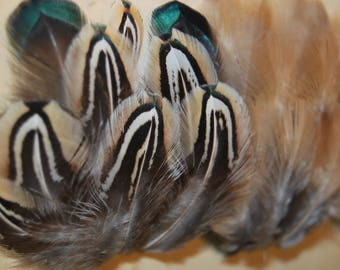 F14 - Set of natural feathers of pheasant/Partridge - 30plumes-4/5cms - (F14)