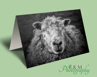 Sheep Greeting Card - sheep - ewe - animal card - personalised card - sheep photograph - any occasion card - farm animal - greetings card