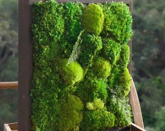 """18x18"""" Moss Wall Art with no sticks. Real preserved zero-care green wall. Real preserved moss, ferns, and driftwood."""