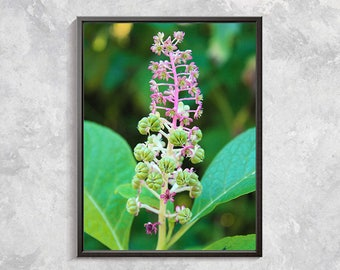Green Flower Macro Photography, pink flower photo print macro floral photography print, floral wall decor, nature floral wall art photo11x14