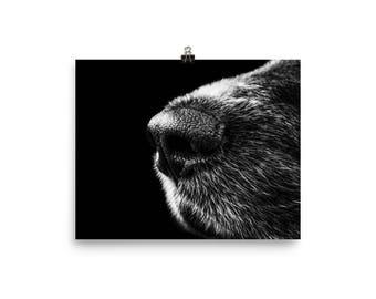 Black And White Dog Photo Image Digital Download B&W