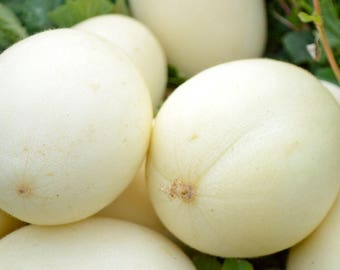 Free Shipping!10 White melon seeds! delicious fruit!! Fresh seeds From Portugal!