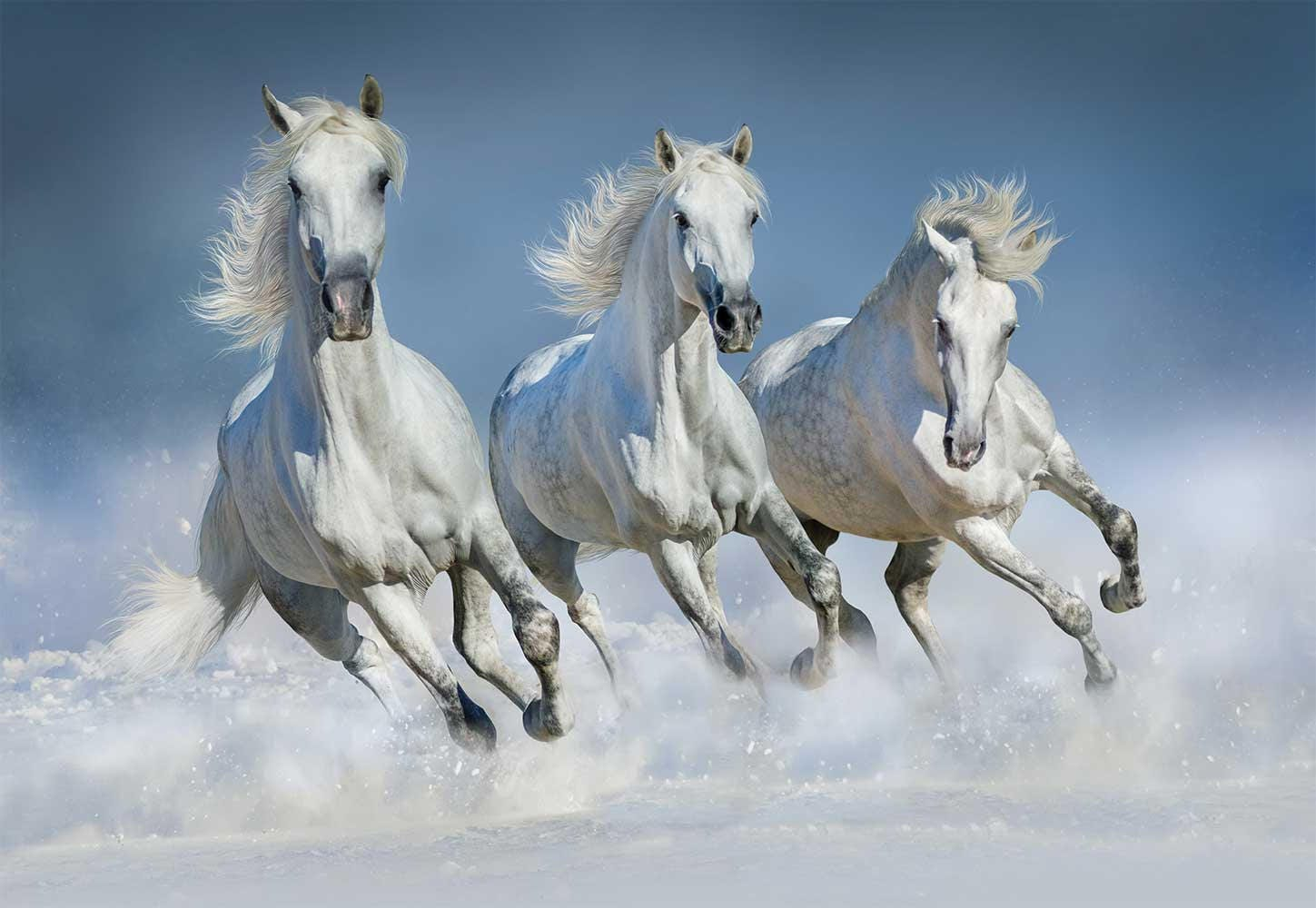 Wallpaper animals wall mural horses horses wall decal wallpaper wallpaper animals wall mural horses horses wall decal wallpaper horses wall mural amipublicfo Gallery