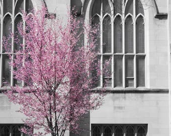 Nature photography, flowers, trees, black and white, color, selective color, architecture, spring, summer