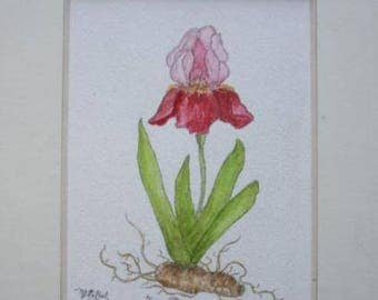 "Watercolor ""Purple Iris"" framed original"