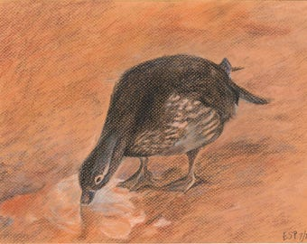 """Little Duck - Original Conte Crayon Drawing - Unframed and Unmatted 12"""""""