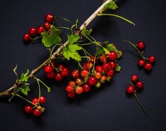 Red Currants Still Life Professional Photograph // Kitchen Wall Art