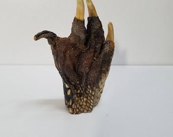 preserved mummified alligator foot