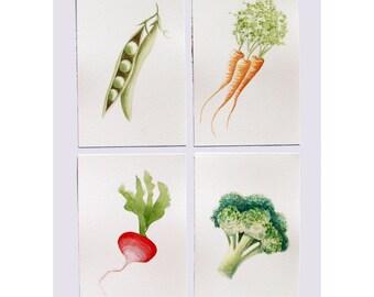 Watercolour Veggies - Carrots, Broccoli, Radish, Peas