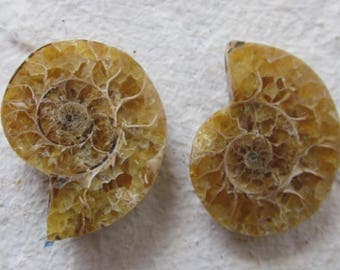 Ammonite. 2 Pcs. S0565