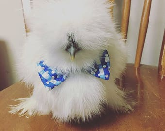 Chicken bow tie accessory