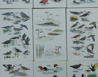 Vintage Bird Field Guide Plates, Set of Nine, Shore Birds