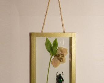 The Herbarium Anderson #1