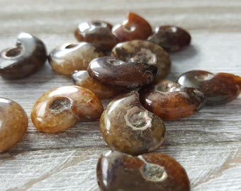 Small Tiny Ammonite Fossil Beads