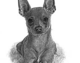 A4 Chihuahua print