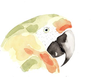 Parrot yellow, green and red. Original watercolor