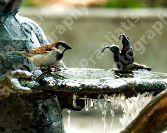 Outdoor Bird and Fountain in Chicago Park 11x17 | DIGITAL DOWNLOAD | Photography, Art, Decor, Background, Gift