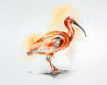 Scarlet Ibis Eudocimus ruber Original Watercolor Painting High Quality Giclée Print canvas, home decor office nursery animal art gift PRINT