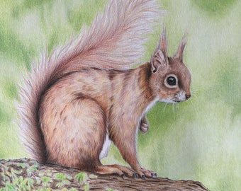 Red Squirrel- Print
