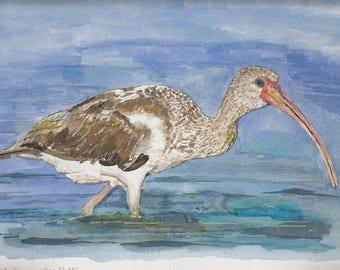 Florida Ibis Original Watercolor Giclée Print (Limited Edition)