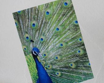 "Postcard ""Peacock"""