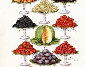 Vintage Image Fruit Download Kitchen Art