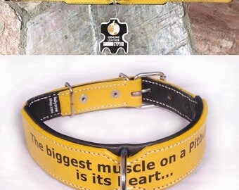 Leather Dog Collar, Yellow Leather Dog Collar, Bully Breed Dog Collar.