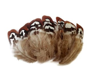 Pheasant feathers x 10