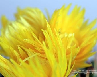 Texas Yellow Cactus Flower 16x24 Digital Download, Home Decor, Wall Art