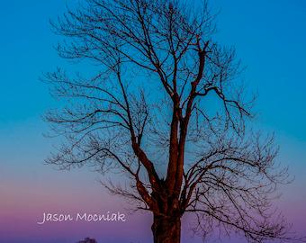 Winter Nights - Tree Moon