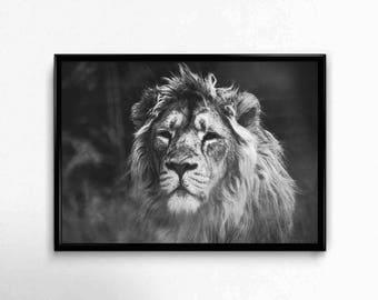 lion print , animal wall art  ,lion wall art , lion printable art , safari art ,  animal printables , lion photograph