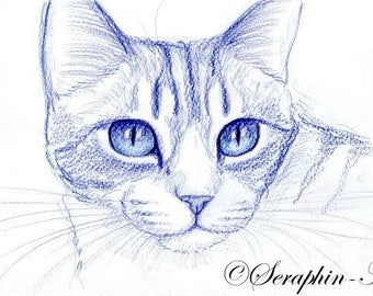 Blue Kitten Original Pencil Drawing