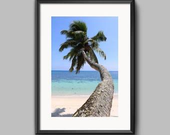 SALE*** Digital Print - Mahe Palm in Seychelles