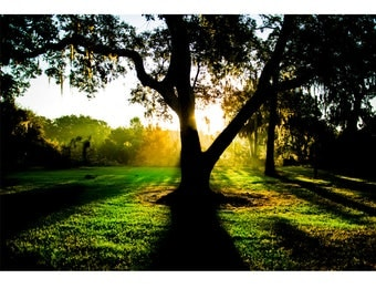 Landscape Photography - King of Limbs, Nature Photography, Sunrise, Tree, Florida, Prints, Canvas