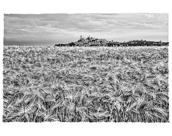 Monferrato crops
