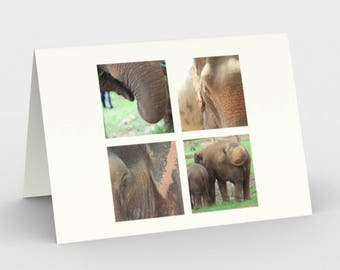 "Notecards: Wildlife Photography ""Elephant Photo Quartet"" by Malinee Ganahl. Asian Elephants in Four Color Photographs.  Closeups.  Set of 3."