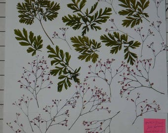 Real Pressed Dried Flowers Over 25 Assorted Flowers Green Leaves, Pink Coral bell Ready for your project Craft supply