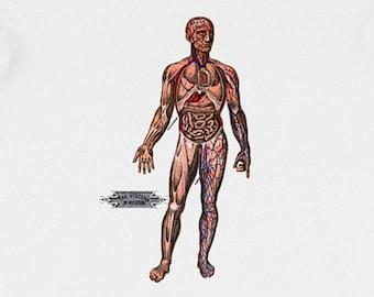 Unisex | Viscera in Position | Victorian Anatomical Illustration T-Shirt