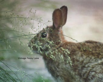 Nature Photography Wild Rabbit, Instant Download