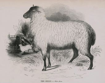 1840s-1850s Antique Engraving of the Sheep