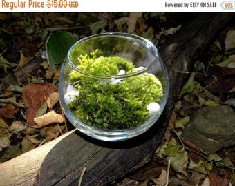 Save25% Moss Terrarium Kit-Simple Green Pillow moss-Easy Care-White stones-Woodland Forest moss-Live Moss
